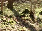 grasswoods hazel and moss stumps
